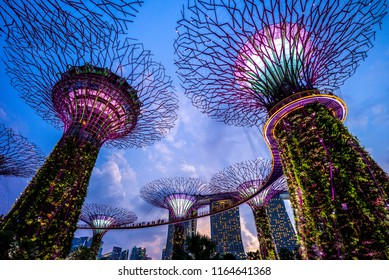 Singapore, Singapore - August 11, 2018: Supertree of  Gardens by the Bay in singapore at night