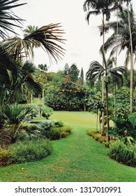 Singapore Botanic Gardens - Jan 28th 2019 - a 158-year-old tropical garden. It is one of three gardens, and the only tropical garden, to be honoured as a UNESCO World Heritage Site.