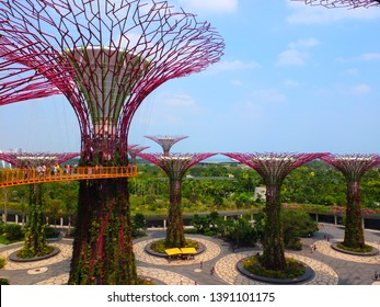 Singapore City / Singapore - 7th March 2014: Famous supertrees constructions