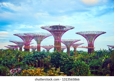 SINGAPORE CITY, SINGAPORE - JANUARY 13, 2019:  Gardens by the Bay is a nature park