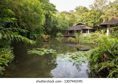 Singapore - December 2018: Pond with lily pads at the Wetland Center at Sungei Buloh Wetland Reserve.