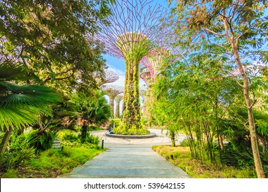 SINGAPORE - FEBRUARY 14, 2016: Supertrees at Gardens by the Bay. The tree-like structures are fitted with environmental technologies that mimic the ecological function of trees.