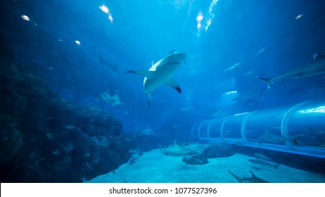 Singapore, Indonesia. February 15, 2018: shark swimming in S.E.A. Aquarium, Singapore