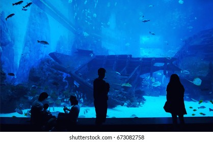 SINGAPORE, JAN 16 , 2017 : Silhouettes of people looking fish in S.E.A. Aquarium.
