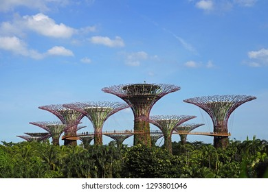 SINGAPORE - JANUARY 12, 2019: Supertree Grooves over the blue sky. Supertree Grooves located in Garden by the Bay, Singapore.Beautiful landmark for traveller.Dream destination.Nature Background