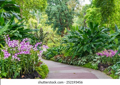 SINGAPORE, SINGAPORE - JANUARY 23: National Orchid garden in Singapore on JAN 23, 2015. It is located in the Singapore Botanic Gardens, and has about 60,000 orchid plants - consisting of 400 species.