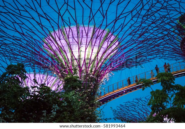 SINGAPORE, JANUARY 27: Supertree grove at night in Gardens by the Bay, on January 27, 2017 in Singapore