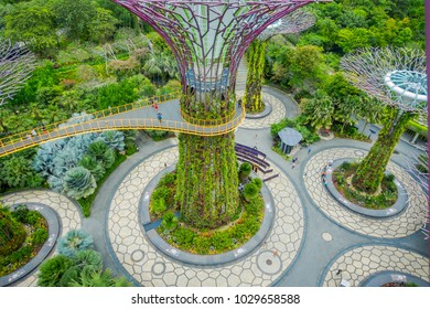 SINGAPORE, SINGAPORE - JANUARY 30, 2018: Gorgeous above view of supertree at Gardens by the Bay with metallic branches. The tree structures are fitted with environmental technologies, Singapore