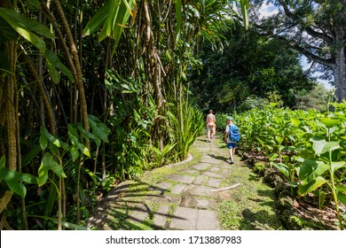 Singapore - July 1, 2019 - Inside Singapore Botanic Gardens