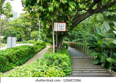 SINGAPORE - JUNE 23, 2018: the bicycle lane at southern ridges is empty on the weekdays but nourishing in verdant green nature