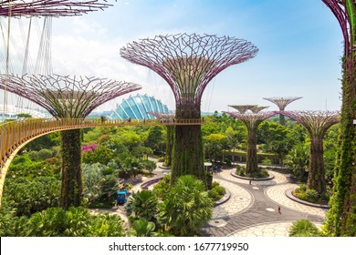 SINGAPORE - JUNE 23, 2019: The Supertree Grove and Skyway at Gardens by the Bay in Singapore near Marina Bay Sands hotel at summer day