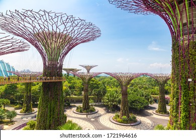 SINGAPORE - JUNE 23, 2019: The Supertree Grove at Gardens by the Bay in Singapore near Marina Bay Sands hotel at summer day