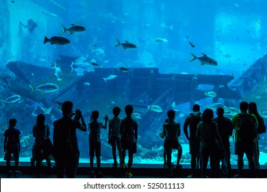 Singapore - June 26, 2016: Unidentified people watch fish in the Singapore Aquarium in Singapore.