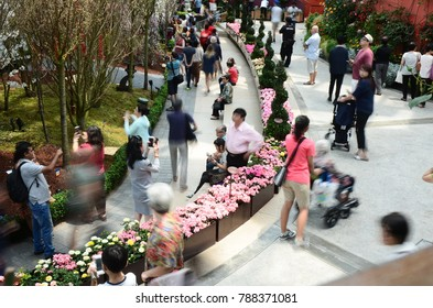 SINGAPORE, MARCH 13: cherry blossoms in the interior of Flower Dome on March 13, 2017 in Singapore. Flower Dome is the world's largest glass greenhouse.