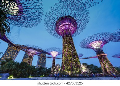 """SINGAPORE -MAY 21:Night view of Supertree at Gardens by the Bay on May 21, 2016. It is part of strategy by the Singapore government to transform Singapore from a """"Garden City"""" to a """"City in a Garden""""."""