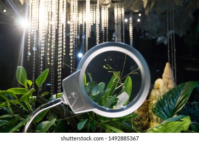 Singapore - Oct 14, 2018: blur of the plants under a magnifying glass in Secret garden zone in Cloud Forest Dome in Gardens by the Bay