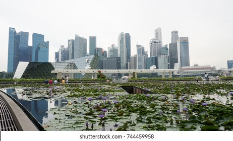 Singapore: October 1, 2017 - High rise buildings in Singapore business district with lotus flowers in the pond as the foreground, Singapore.