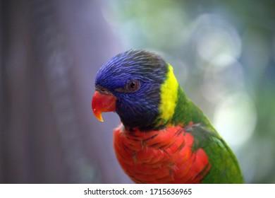 Singapore - Rainbow Parrot - Paradise