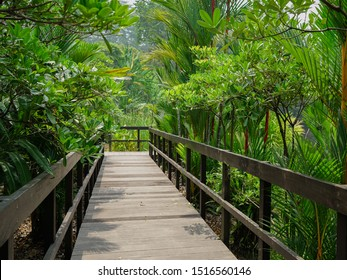 Singapore - September 22, 2019:  Old wooden bridge in deep forest in the botanical garden of Singapore, near the National Orchid Garden and Tanglin Gate