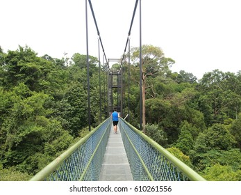 Singapore suspension bridge, treetop walk path at MacRitchie Reservoir