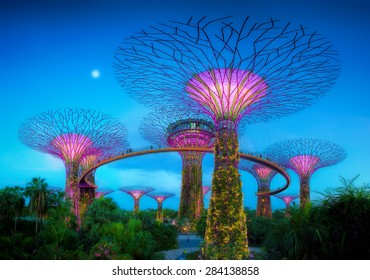 SINGAPORE-JUN 1: Evening view of The Supertree Grove at Gardens by the Bay on Jun 1, 2015 in Singapore. Spanning 101 hectares of reclaimed land in central Singapore.