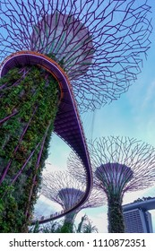 SINGAPORE,SINGAPORE - AUG. 28 : Supertree Grove facade on Auguest 28,2017 in Singapore,Singapore. It provide shade in the day and come alive with an exhilarating display of light and sound at night.