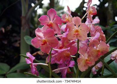 Singapur National Orchid Garden