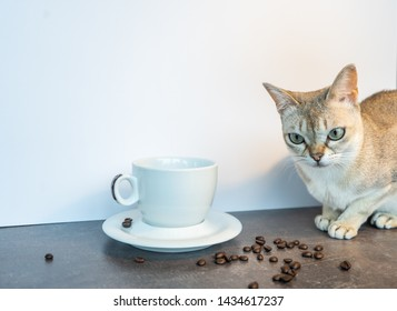 singapura cat with cup of coffee and hand