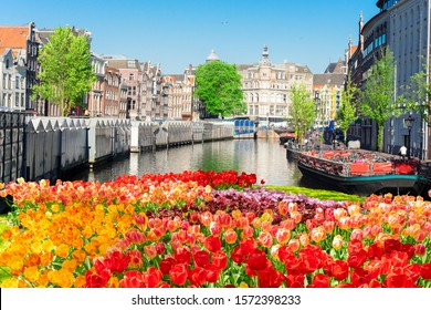 Singel canal in the center of Amsterdam with tulips, Netherlands