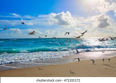 Singer Island beach seagulls at Palm Beach Florida in USA