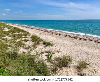 Singer Island, Florida, with multiple sea turtle nests marked with wooden stakes.  This is a thriving beach for nesting turtles.