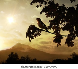 Singing bird on a branch against the morning sun