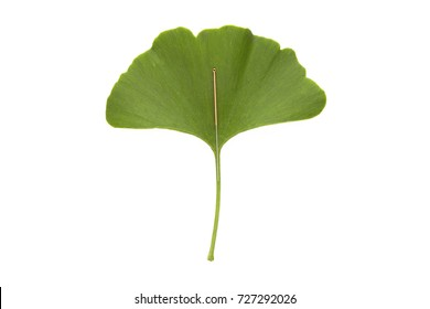 A single acupuncture needle on a green ginkgo biloba leaf, isolated on white background