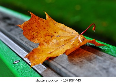 single autumn yellowed and wet leaf stuck on the green fence