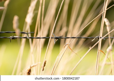 a single barbwire in front of a field to signify the border between two fields