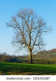 A single, bare, tree stands against a blue winter sky in a meadow in the Derbyshire countryside.