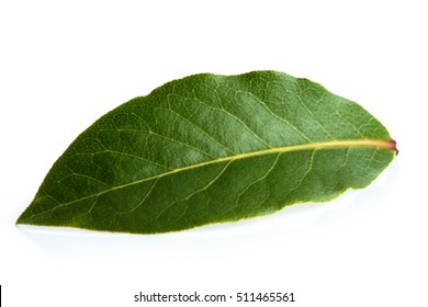 Single bay leaf isolated on white.