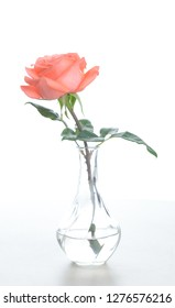 Single beautiful fresh pink rose in glass vase isolated on white background - Image