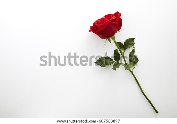 Одиночная красивая красная роза изолирована на белом фоне