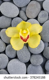 single beautiful yellow orchid on gray stones background