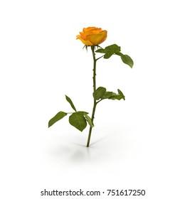 Single beautiful yellow rose isolated on white. 3D illustration