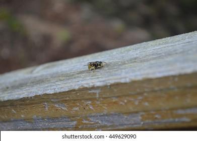 Single Bee