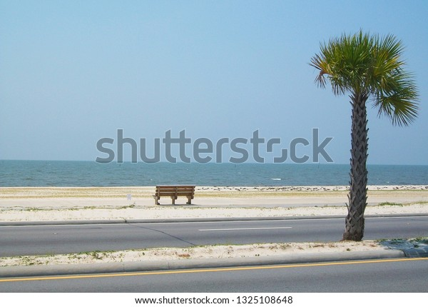 Single Bench Single Palmetto Tree On Stock Photo Edit Now 1325108648