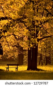 Single bench in park, under beautiful tree, autumn