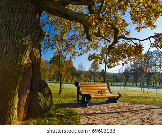 single bench under oak in autumn park