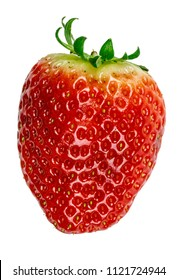 Single big red strawberry isolated background in white color