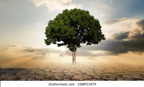 Single big tree with crackle soil and ray ligh, air pollution concept