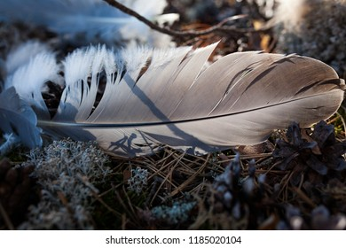 Single bird feather on ground