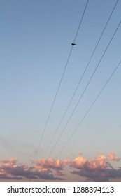 A single bird perched on a telephone wire, set against the sunset. Fairfield, MT