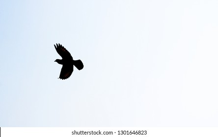A single bird pigeon flying in a clear blue sky silhouette photo